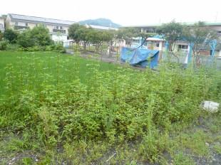 敷地に草がぼうぼう